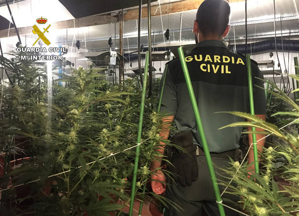 La Guardia Civil desmantela un invernadero clandestino de marihuana en Lorquí
