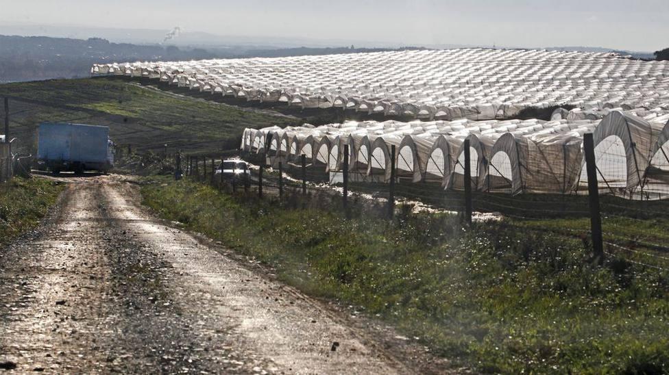 Invernaderos situados en la comarca de A Terra Chá