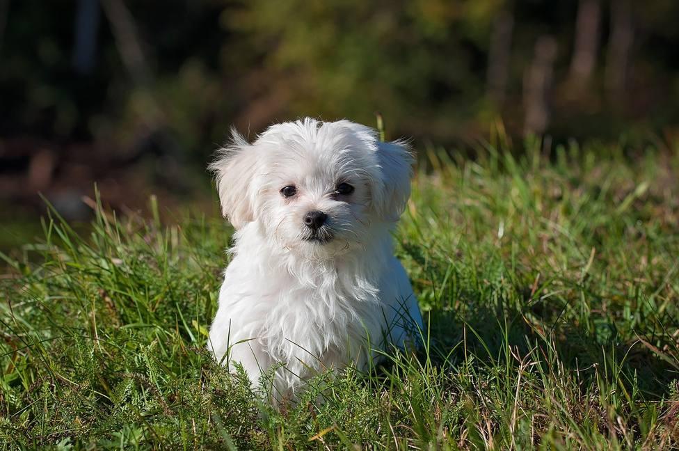 ctv-mwy-dog-1123016 1920