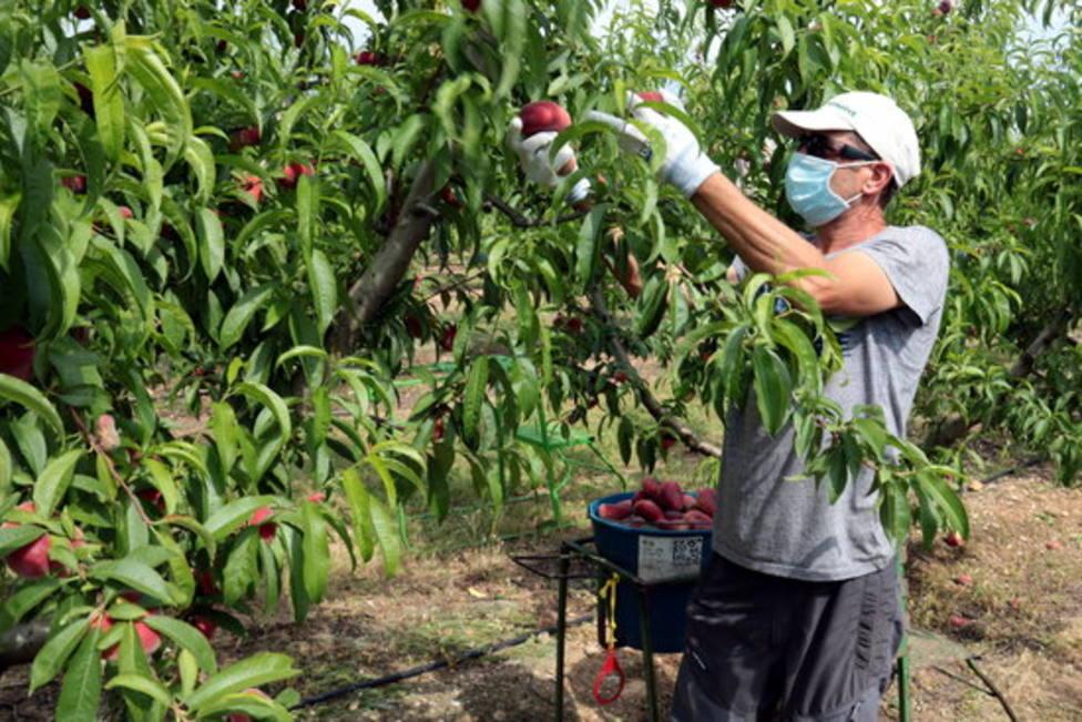 Frutero del Baix Segrià - MÓN RURAL