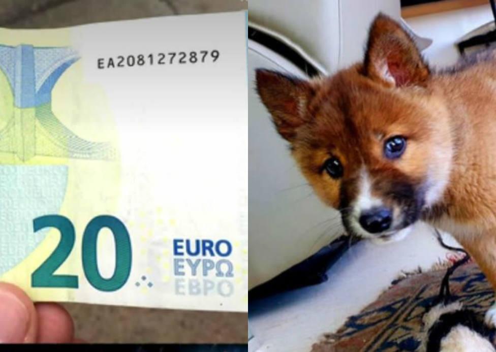 Un vecino que halla 20 euros y el perrito abandonado cuyo ADN sorprende a todos entre lo más leído del año