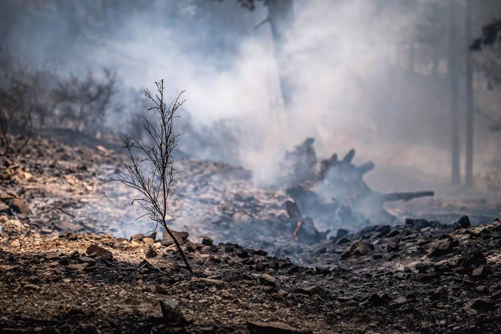 Debido a los incendios en 2021, Italia ha perdido 110.000 hectáreas