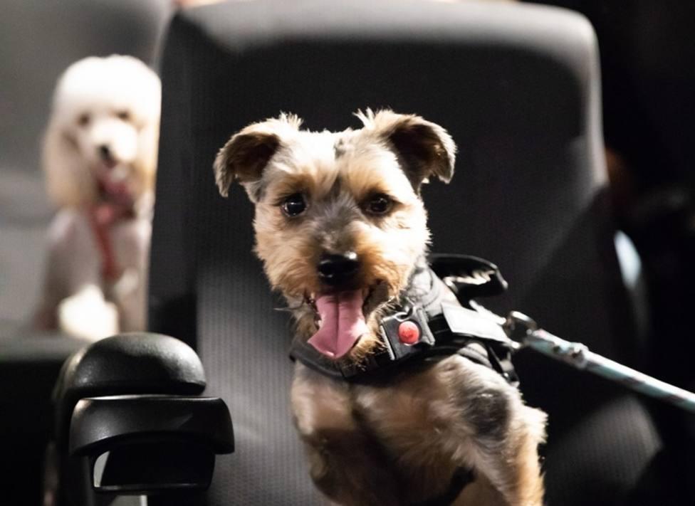 Más de 30 perros acuden al cine gracias a una sesión petfriendly de Cinesa y Fundación Affinity