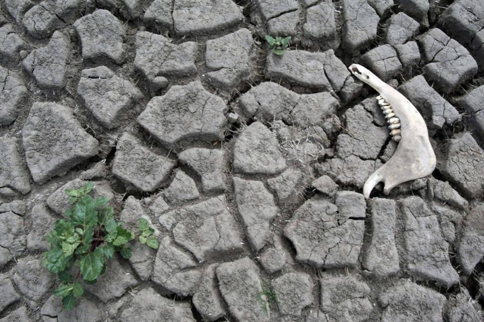 Óscar Soriano, científico del CSIC: La bofetada del cambio climático puede llegarnos por cualquier lado