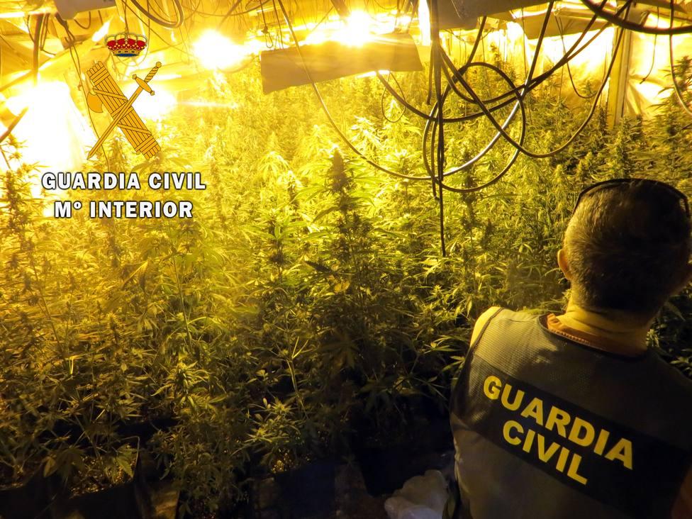 Localizan una plantación de marihuana con 400 plantas en un cortijo con difícil acceso en Berja