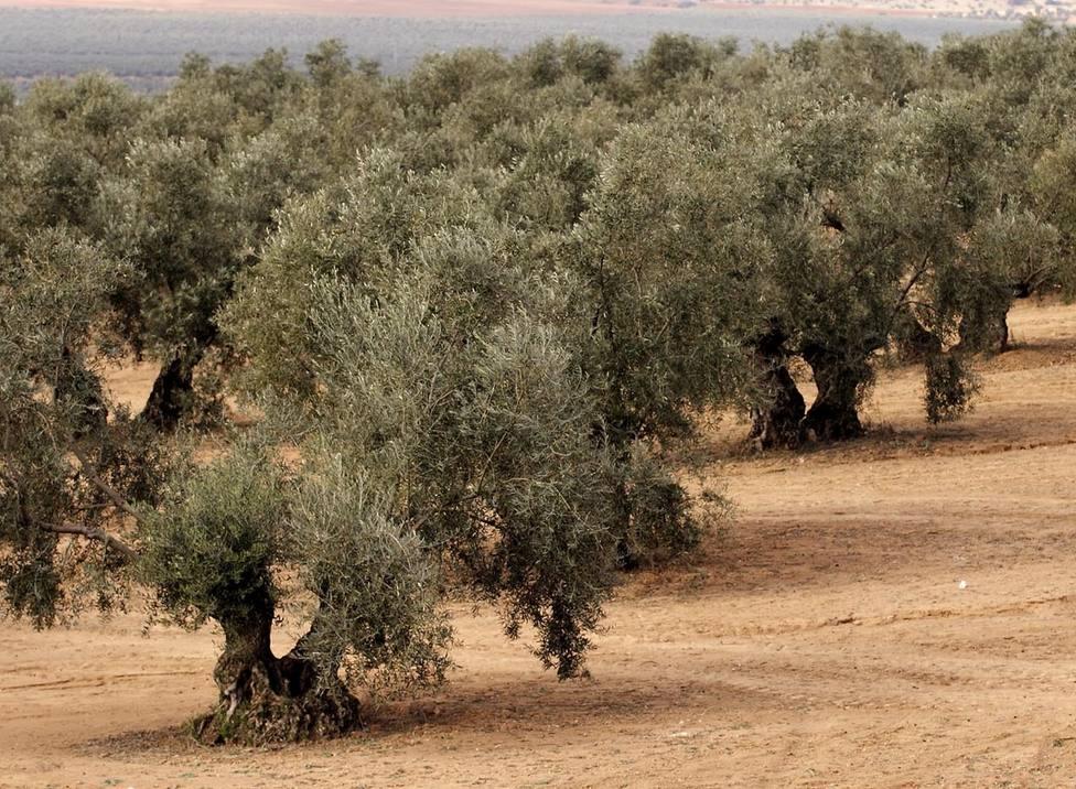 ctv-jey-olivos