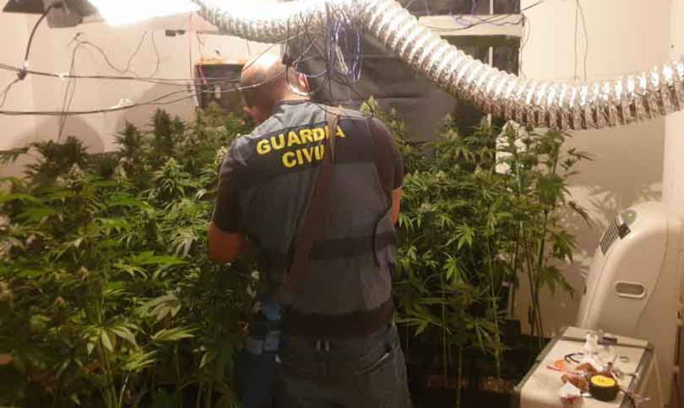 ctv-qwa-marihuana-santa-elena
