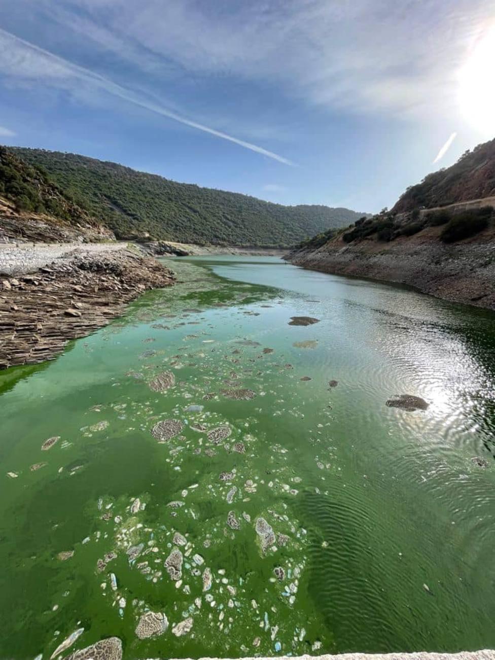 Conchas de agua en el Tajo. Foto: Paco Castañares