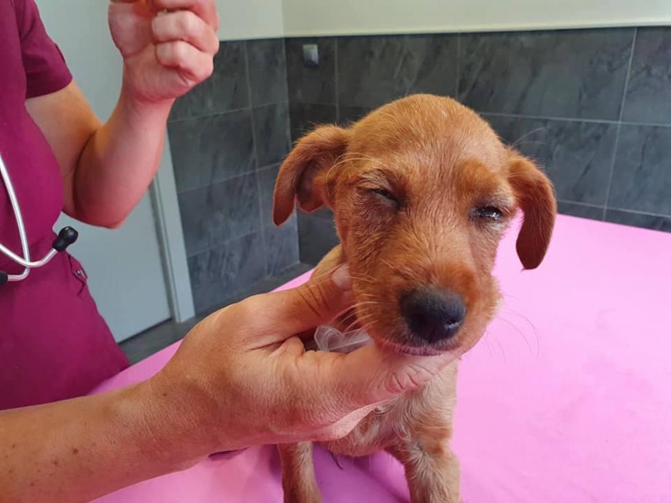 Red Ayuda Animal denuncia la brutal agresión a una cachorrita en Arnedo