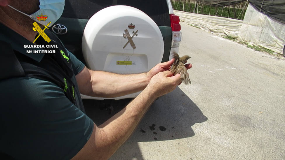 Investigan a tres personas por la captura no permitida de aves con redes invisibles en El Ejido