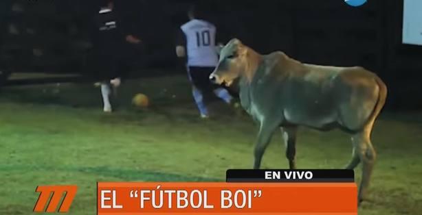 Fútbol boi, el deporte que mezcla fútbol y vaquillas