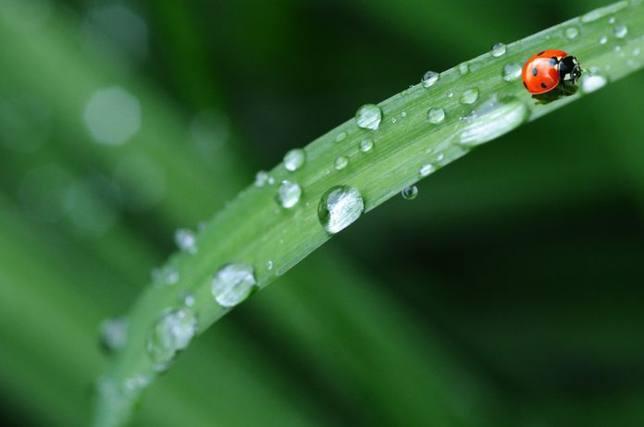 Las lluvias llegarán a más zonas de España