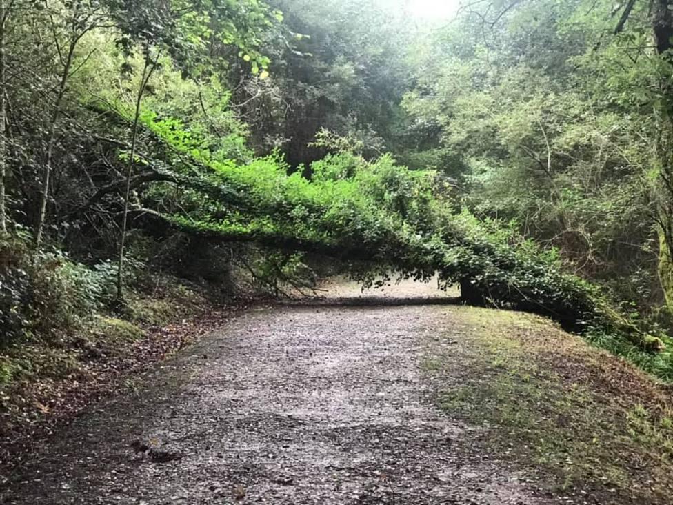 """Los árboles del paseo del río Madalena padecen una enfermedad que les afecta """"seriamente"""""""