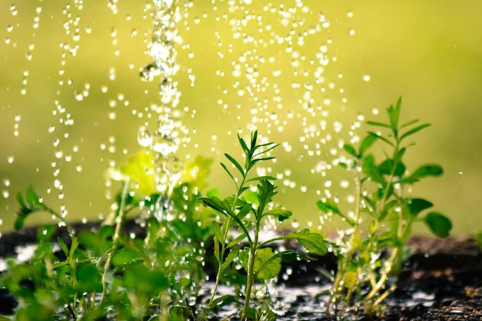 El truco definitivo para regar tus plantas de forma eficiente