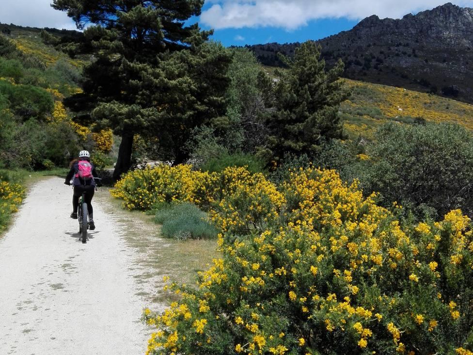 Para disfrutar de los cambroños, Los Molinos organizará rutas ciclistas