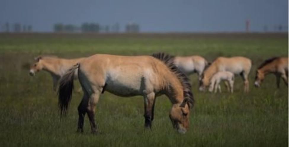 Carbunco en caballos