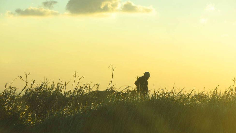 Evangelio 24 julio: El que tenga oídos que oiga