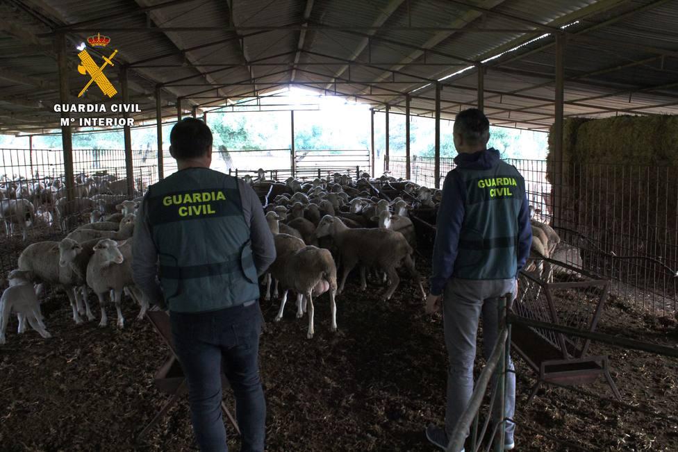 Cuatro detenidos por la supuesta comisión de delitos relacionados con la estafa en la compra-venta de ganado