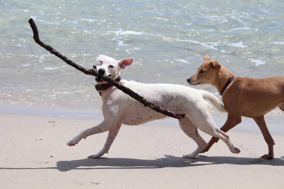 Consjeospara proteger a los perros este verano