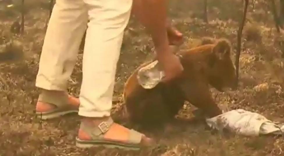 La increíble hazaña de una mujer con la que ha logrado salvar a un koala de las llamas