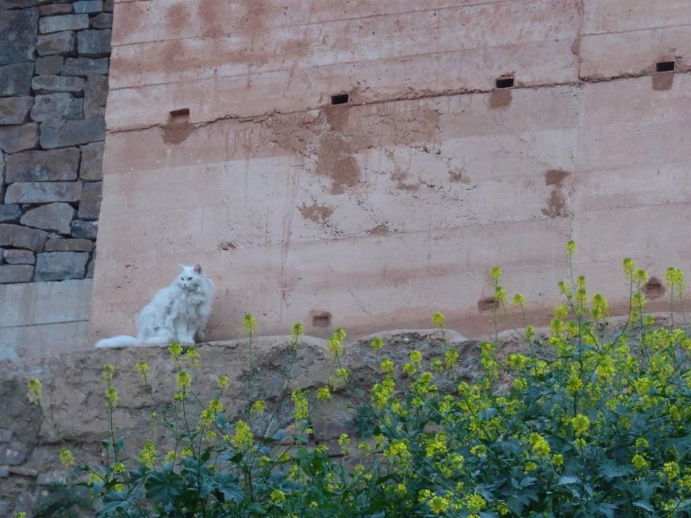 Nidales para vencejos colocados en la muralla de Cáceres