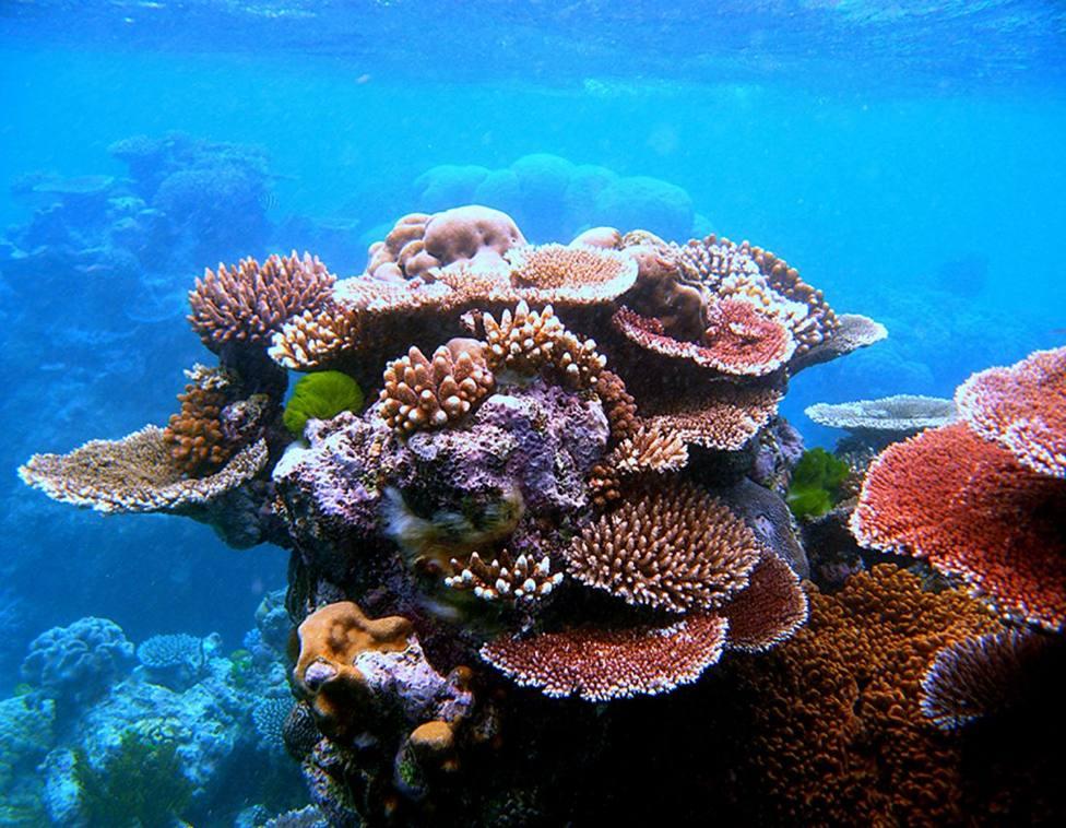 Así con los nuevos arrecifes de coral descubiertos en México
