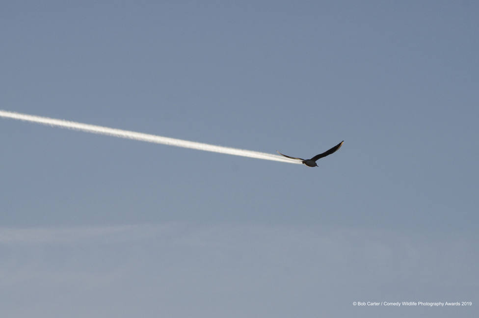 ctv-477-840886bob-carter-is-it-a-bird-is-it-a-plane-00004134jpg