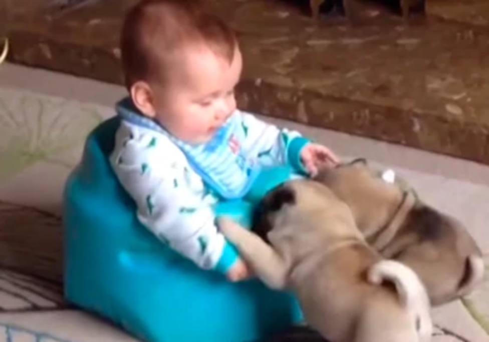 Una madre deja a su bebé en el suelo y sus perros pug protagonizan esta enternecedora estampa