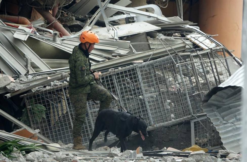Los agentes caninos de la policía, los bomberos y el ejército tienen un papel clave para buscar supervivientes