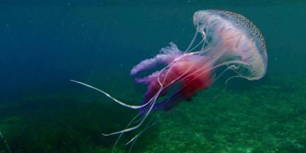 ctv-yho-medusa-luminiscente-kmh--1024x512abc