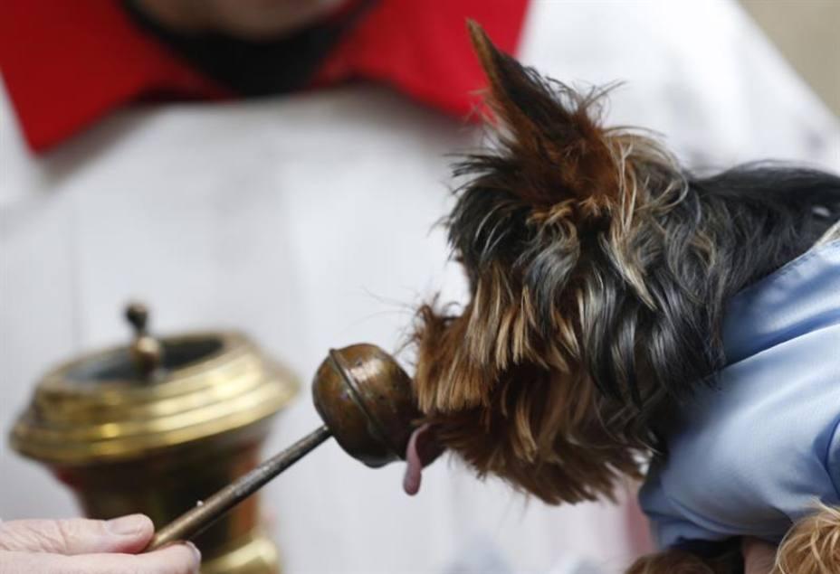 Las mascotas reciben la bendición para gozar de buena salud y amor