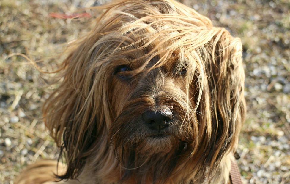 Las razones por las que no deberías pelar a tu mascota durante el verano