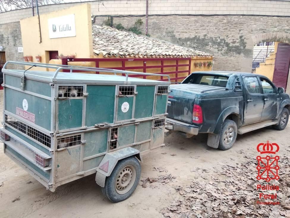 Denunciado un cazador en Olite que llevaba 23 perros en un remolque, 13 de ellos sin regularizar