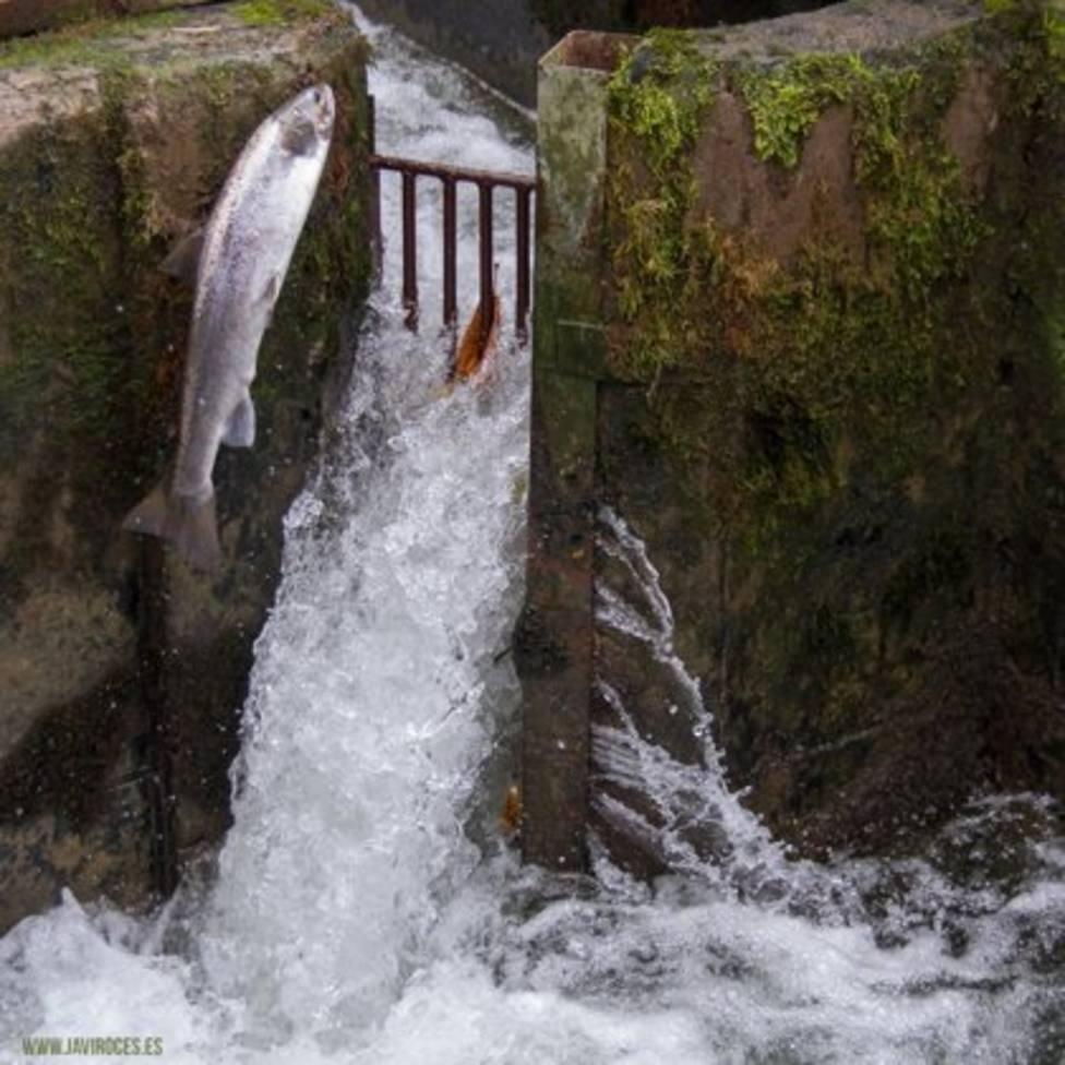 Foto de un salmón saltando en el río (Europa Press)