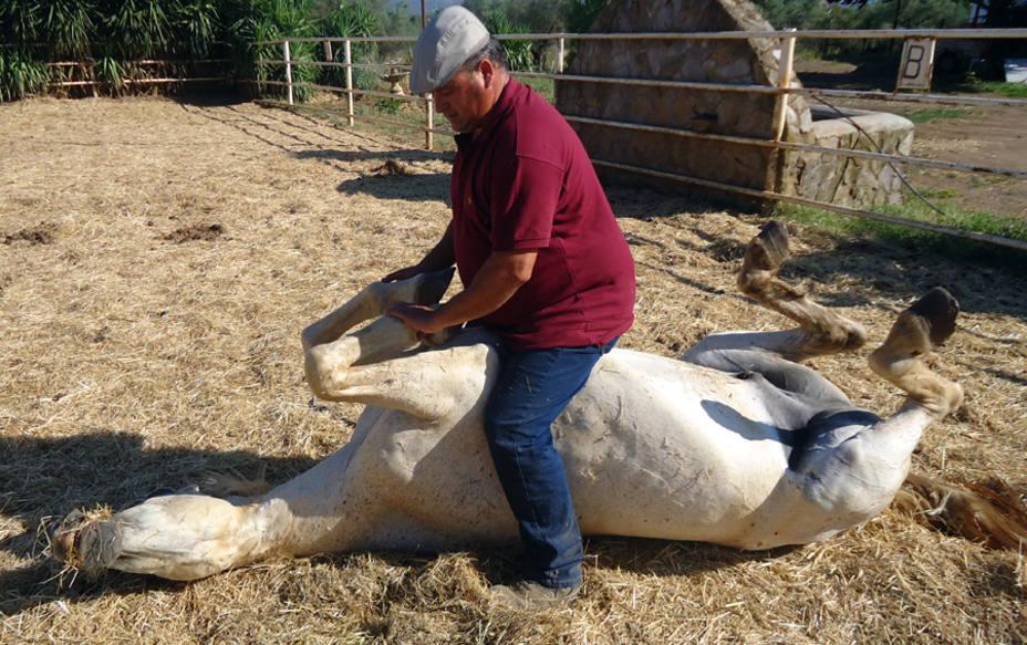 Andrés, el extremeño que susurra a los caballos