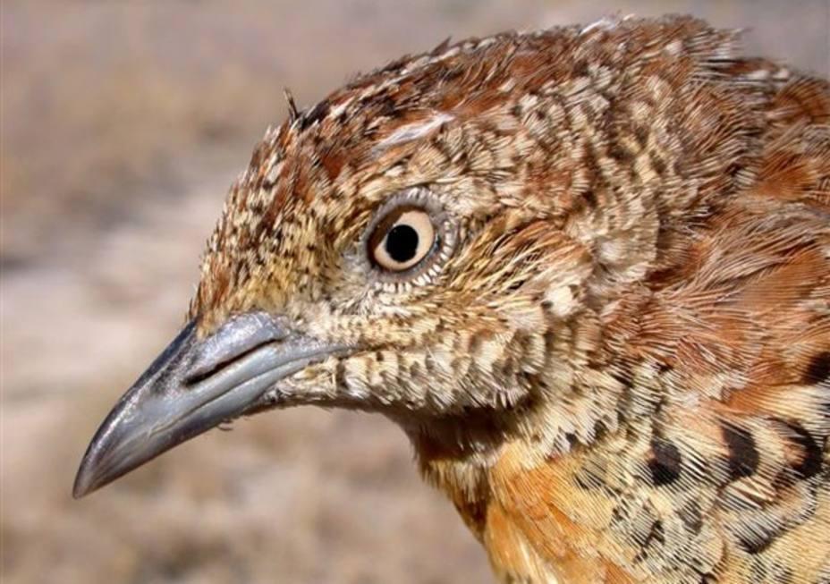 Un investigador español descubre un mecanismo interno en los ojos de las aves que actúa como gafas de sol