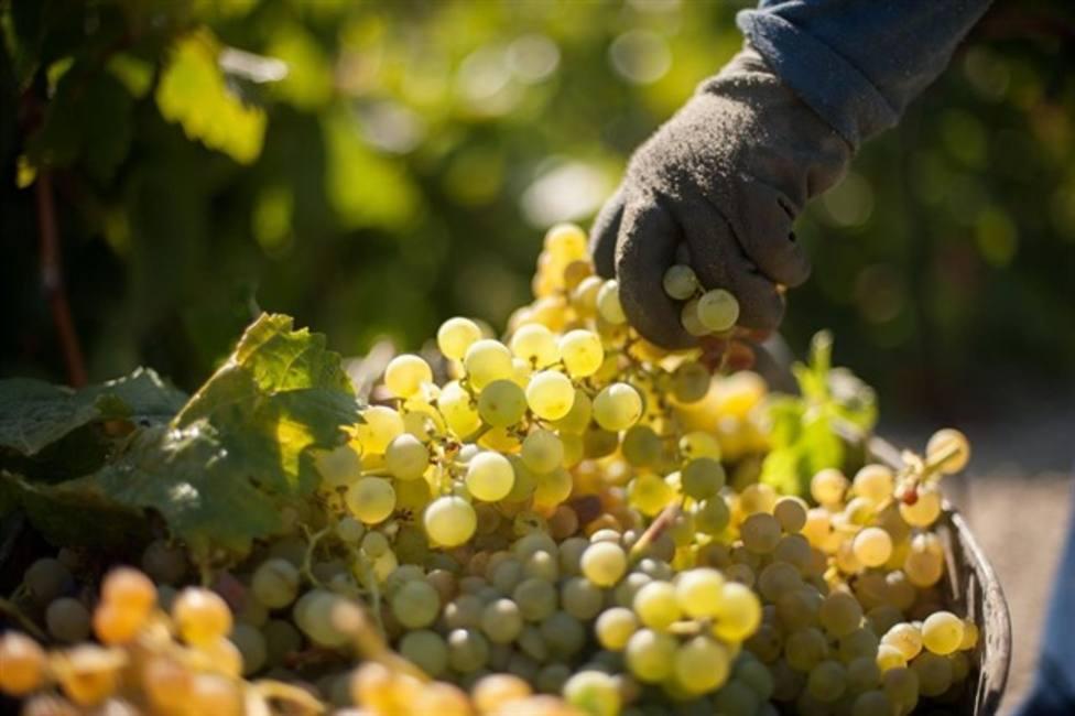 Comienza la cuenta atrás para la vendimia en la DOC Rioja