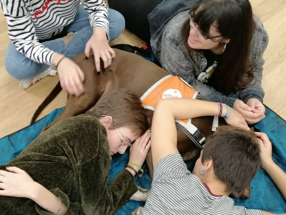 Las terapias con perros en la Universidad Complutense disminuyen el estrés de los estudiantes