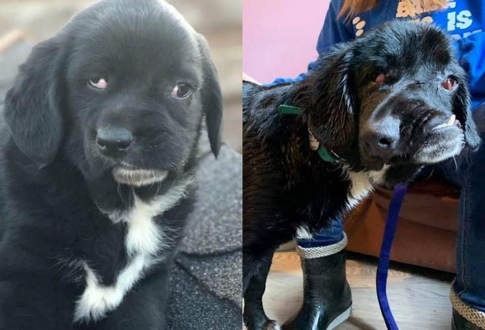 La triste historia de la perrita con la cara desfigurada a la que nadie quiere adoptar