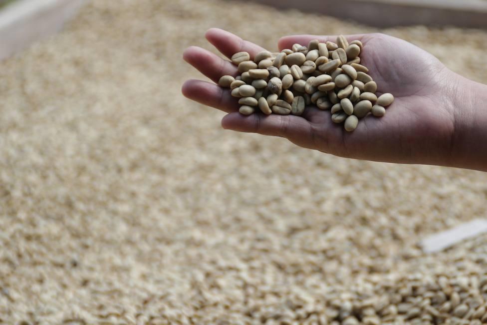 El secreto detrás del café más caro del mundo que te puede producir una indigestión