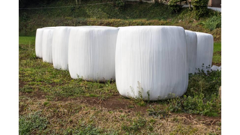 Foto de archivo de hierba ensilada sobre plástico