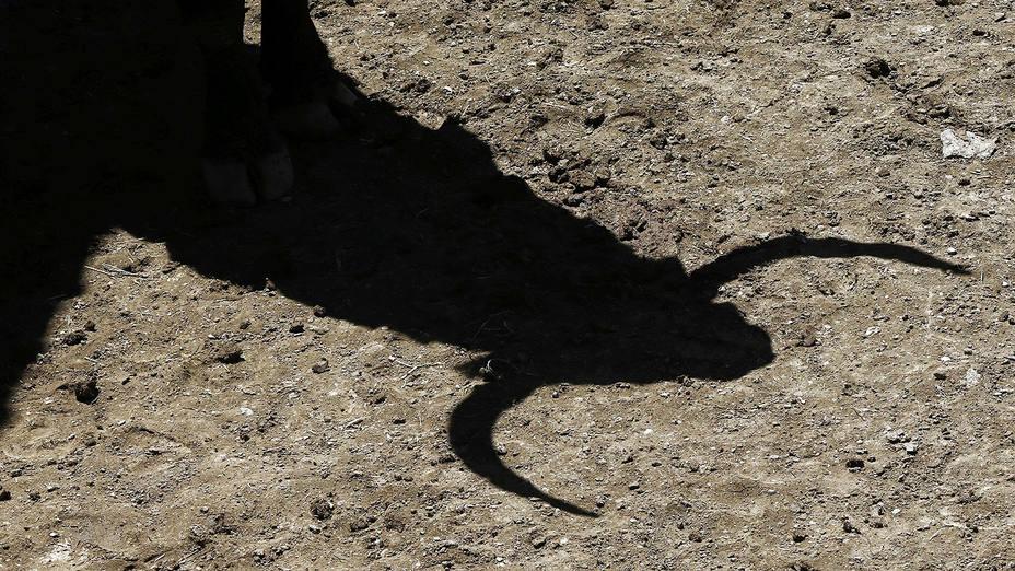 El toro será el principal protagonista de la feria de Alès