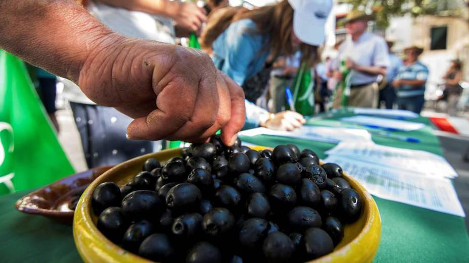 España pide acudir a la OMC si EEUU ratifica los aranceles a la aceituna