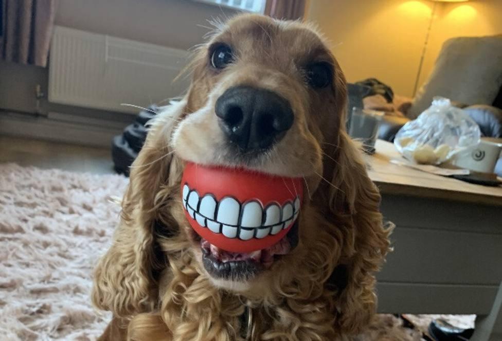 Las 10 fotos más divertidas de mascotas que pueden ganar el Comedy Pet Photography Awards