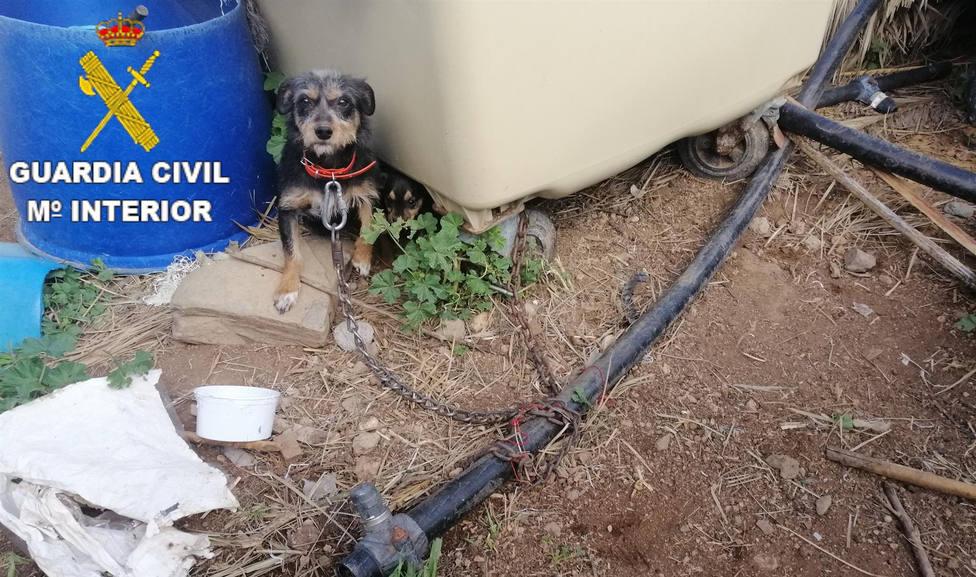 Uno de los perros encontrado en la finca del detenido por maltrato animal - GUARDIA CIVIL