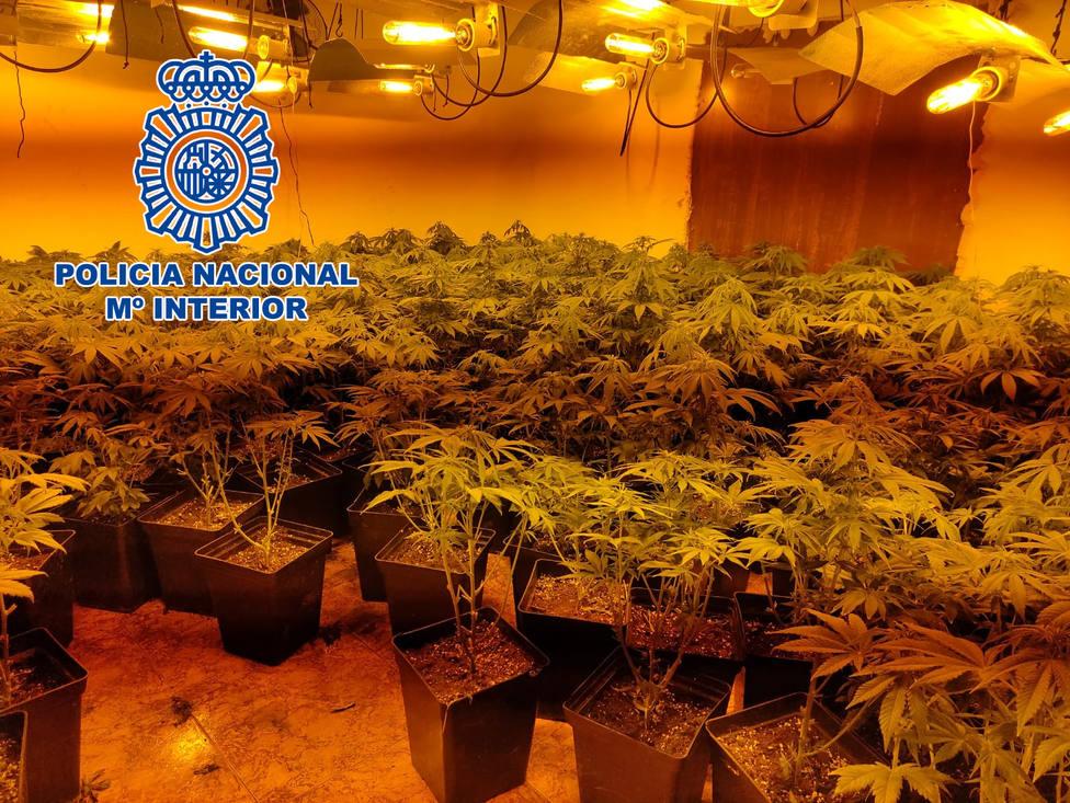 ctv-a4g-marihuanalinares-2