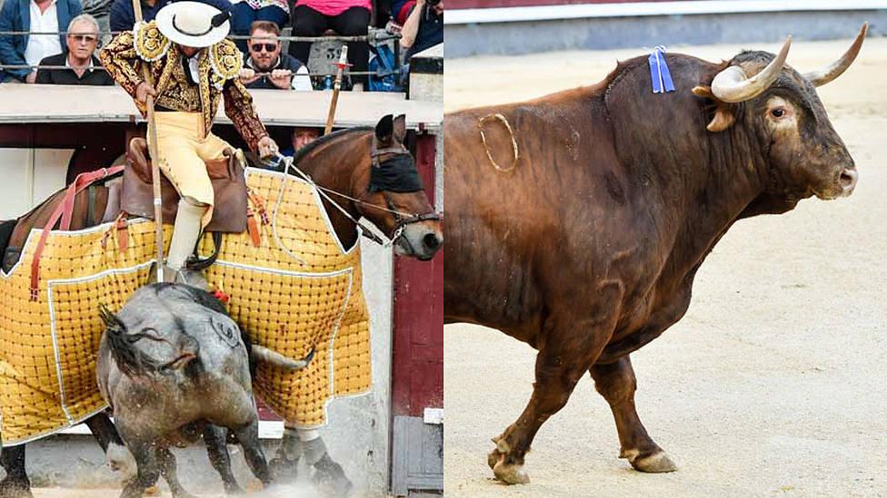 Juan Francisco Peña y el toro Zahonero de Santiago Domecq, premios de la Peña El Puyazo