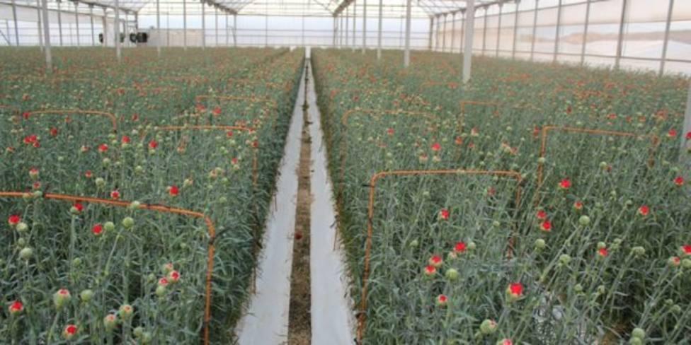 El sector de la flor y planta reclama un Real Decreto que evite un desastre económico