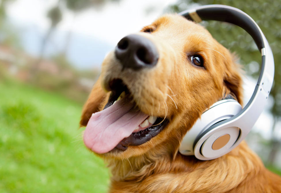 La música clásica tranquiliza a nuestras mascotas, es su preferida