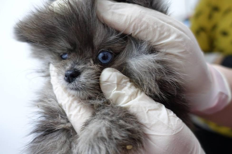 Sucesos.- Encuentran cachorros enfermos y muertos en una tienda de animales de Barcelona